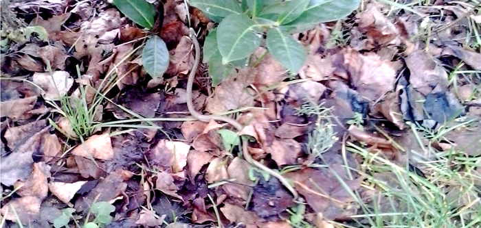 Natrice-fotoElena