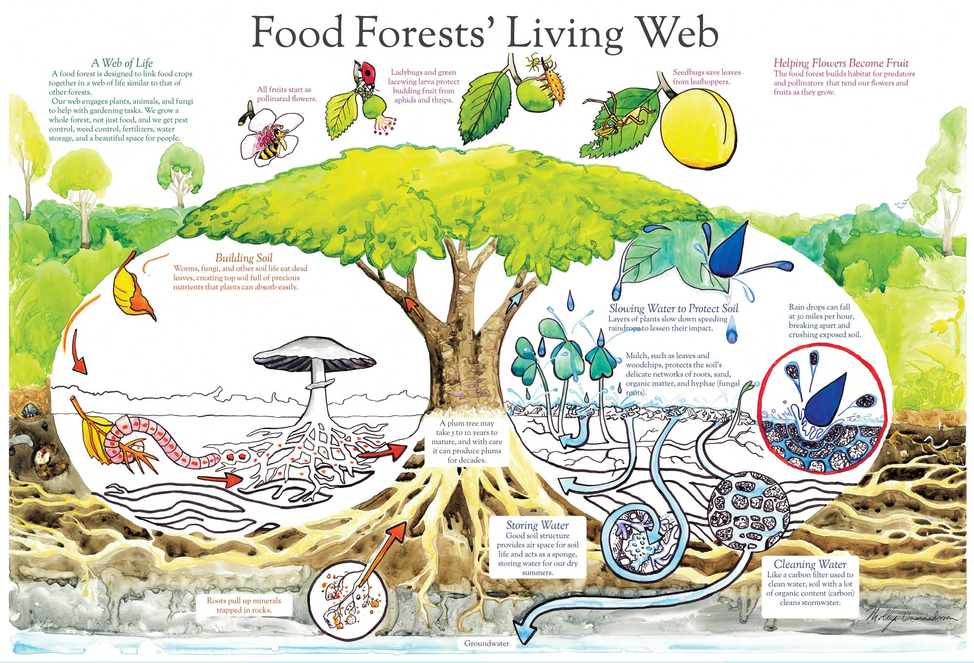 Food-Forests-Living-poster