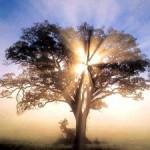 albero1-300x225