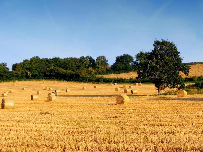 campo-agricoltura-campagna